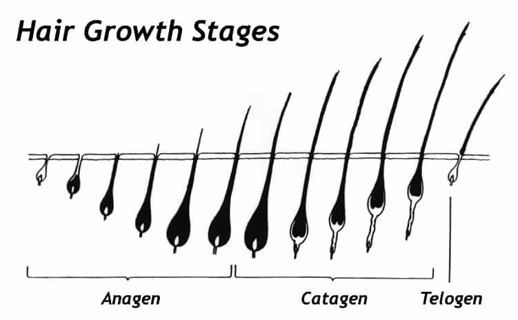 how to grow a longbeard
