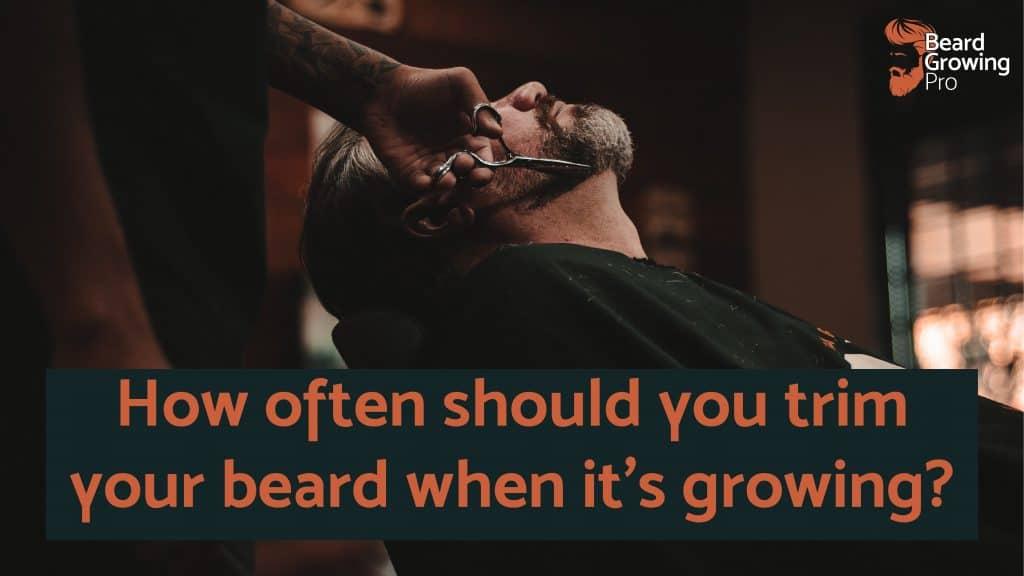 how often trim beard when growing