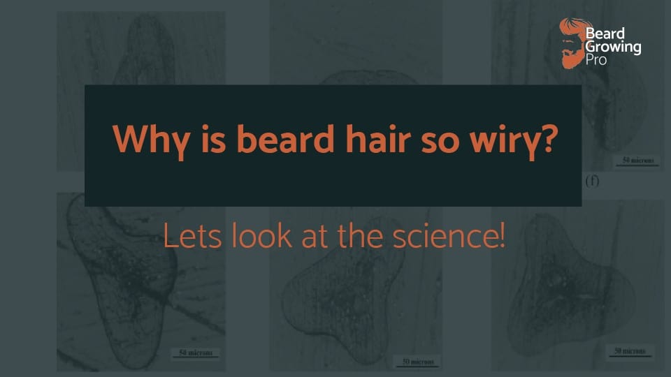 Why is beard hair so wiry? [Let's look at the SCIENCE]