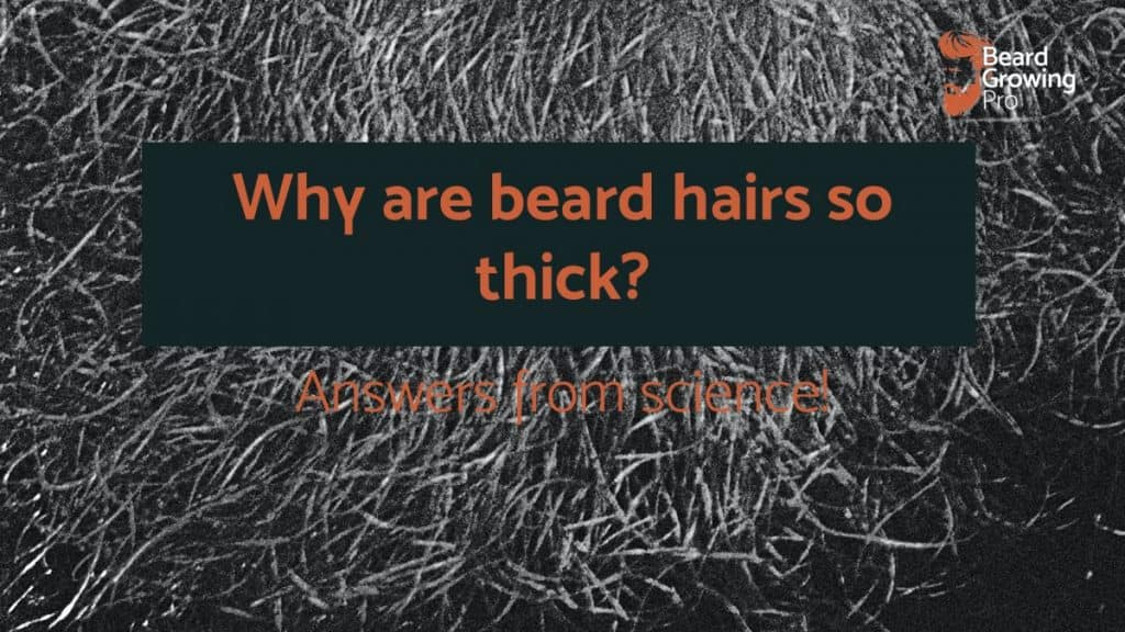 Why are beard hairs so thick