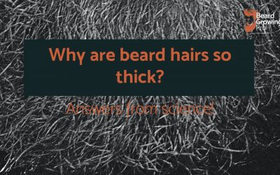 Why are beard hairs so thick? [answers from science]