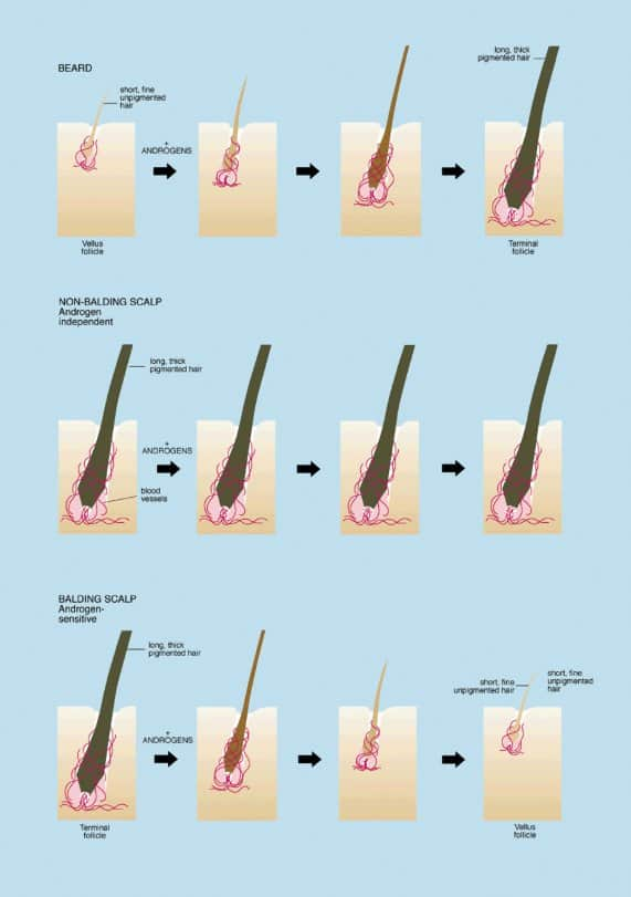 What are the signs of growing a beard? [Little known signs]