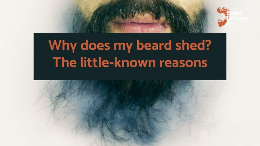 Why does my beard shed?