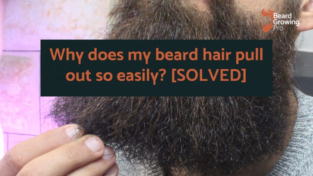 Why does my beard hair pull out so easily? [SOLVED]