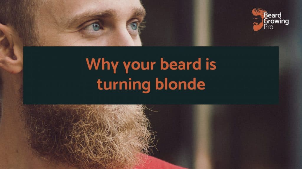 Why is my beard turning blonde