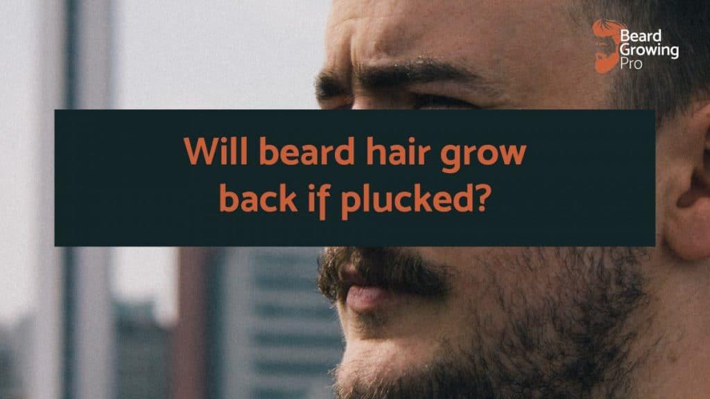 Will beard hair grow back if plucked
